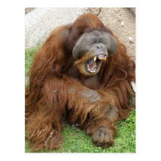 Orangután de risa tarjeta postal