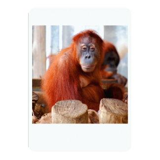 """Orangután de Sumatran, amistoso e inteligente Invitación 5"""" X 7"""""""