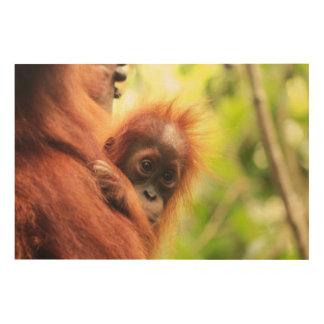 Orangután de Sumatran del bebé Cuadros De Madera
