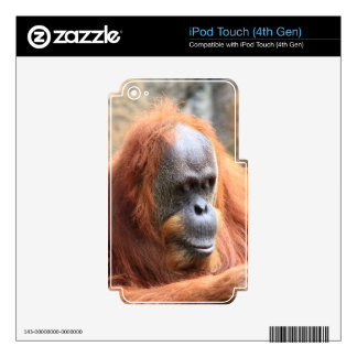 Orangutan Decal For iPod Touch 4G