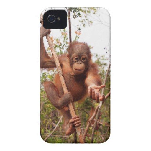 Orangután del albañil del rescate de la fauna iPhone 4 Case-Mate cárcasa