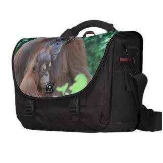 Orangután del bebé bolsas para portatil