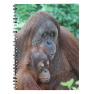 Orangután del bebé con el cuaderno de la madre