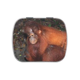 Orangután del bebé con la madre en selva tropical frascos de caramelos