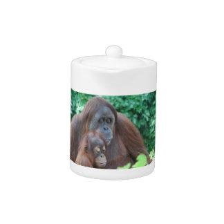 Orangután del bebé con la tetera de la madre