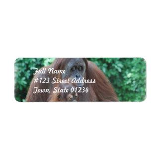 Orangután del bebé con las etiquetas de correo de etiqueta de remite