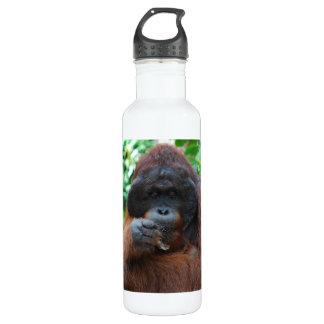 Orangután del varón adulto