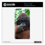 Orangután del varón adulto en Borneo Calcomanía Para iPhone 4