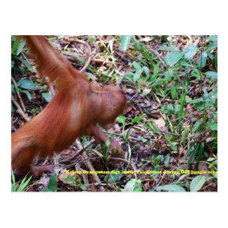 Orangutan Digs in Rainforest Swamp Postcards