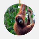 Orangután en la selva Sumatra de la selva tropical Ornamento De Navidad