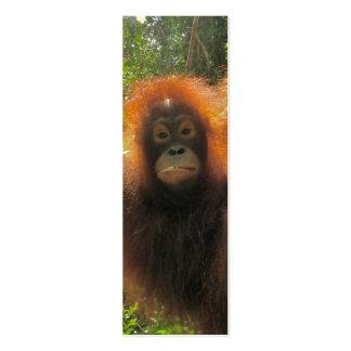 Orangután en las mini señales de Borneo Tarjeta De Visita