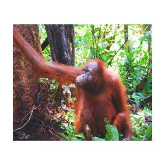 Orangután en selva tropical impresiones en lona estiradas