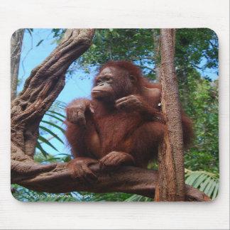 Orangután en sol tapete de ratones