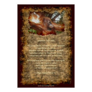 Orangutan Endangered Wildlife Animal Decree Poster