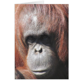 Orangutan Eyes Card