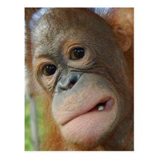 Orangutan Face Postcard