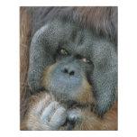 Orangutan Faux Canvas Print