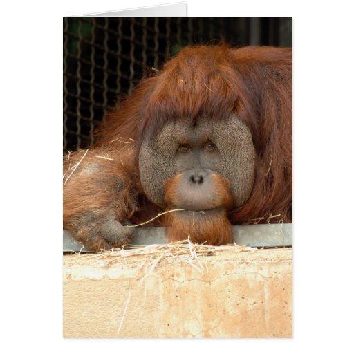 Orangután Felicitacion