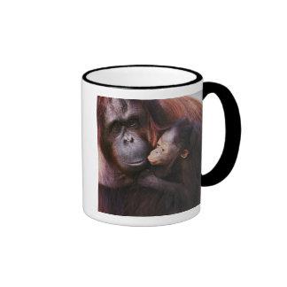 Orangután femenino de Sumatran con el bebé, Pongo Taza A Dos Colores