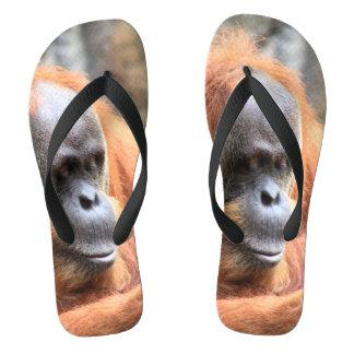 Orangutan flip flops
