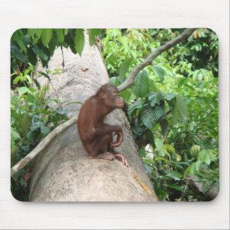 Orangutan Forgets Mouse Pad