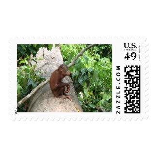 Orangutan Forgets Stamp