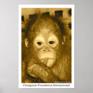 Orangutan Foundation International Poster