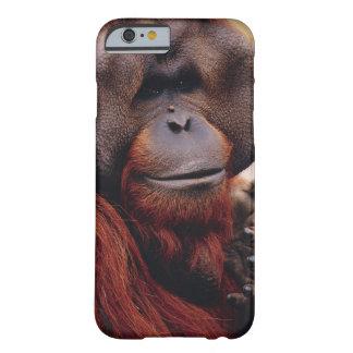 Orangután Funda Para iPhone 6 Barely There