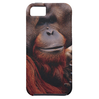 Orangután Funda Para iPhone SE/5/5s