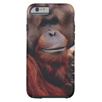 Orangután Funda Resistente iPhone 6