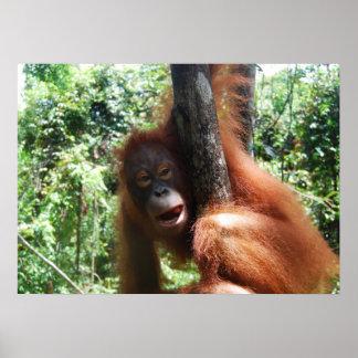 Orangutan Gable Borneo Rainforest Poster