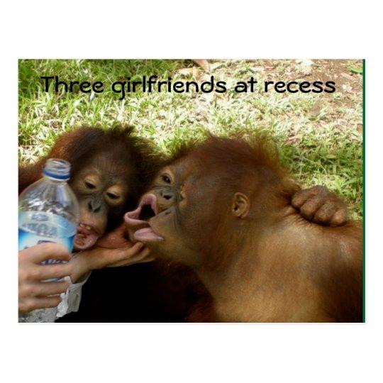 Orangutan Girlfriends at Recess Postcard