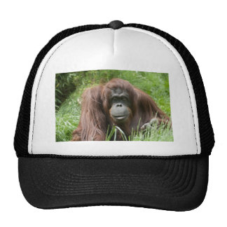 Orangután Gorro