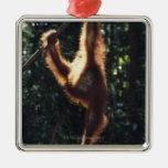 Orangutan Hanging on Liana 2 Square Metal Christmas Ornament