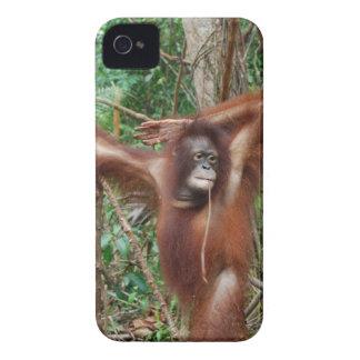 Orangután hermoso del Redhead en actitud modela iPhone 4 Case-Mate Cárcasas