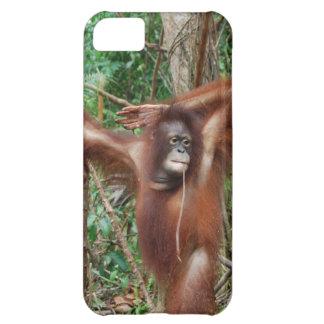 Orangután hermoso del Redhead en actitud modela Funda Para iPhone 5C