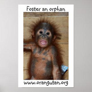 Orangután huérfano del bebé póster