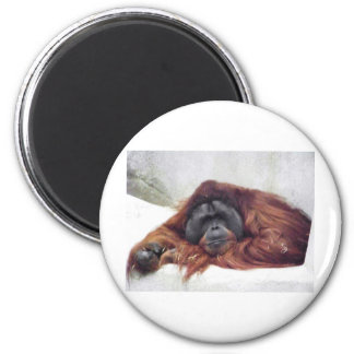 Orangután Imán De Nevera