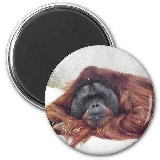 Orangután Imán De Frigorifico