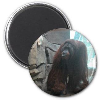 Orangután Imán Para Frigorifico