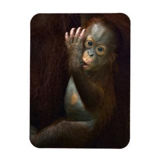 Orangután Imanes Rectangulares
