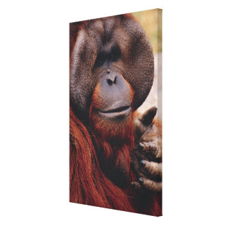 Orangután Impresión En Lienzo