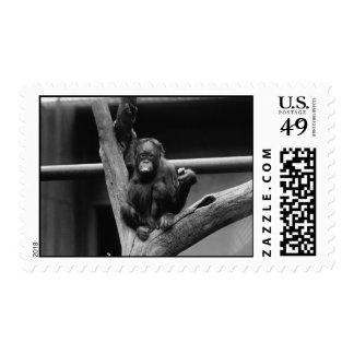 orangutan in black and white postage stamp