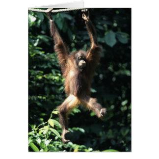 Orangutan in Borneo Card