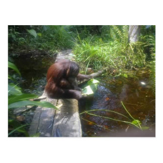 Orangutan in Borneo Forest Postcard