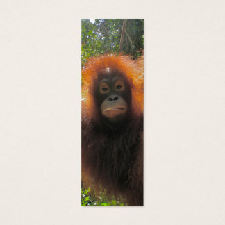 Orangutan in Borneo Mini Bookmarks Mini Business Card
