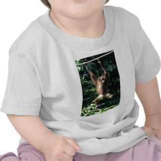 Orangutan in Borneo T-shirts