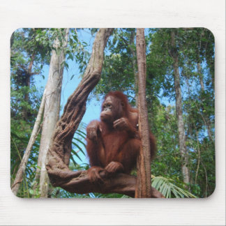 Orangutan in Rainforest Lounging Chair Mouse Pad