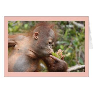 Orangután infantil con la flor tropical tarjetón