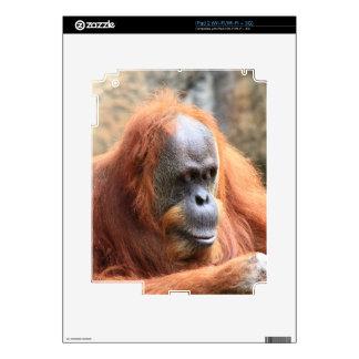 Orangutan iPad 2 Skin